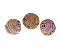 1 Handmade Polymer Clay Beads Wrapped Pinks 19mm